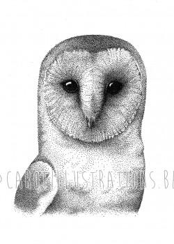 dot owl