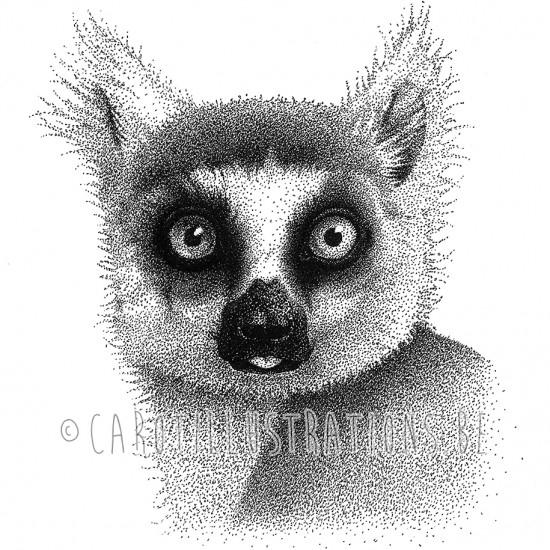 dot lemur